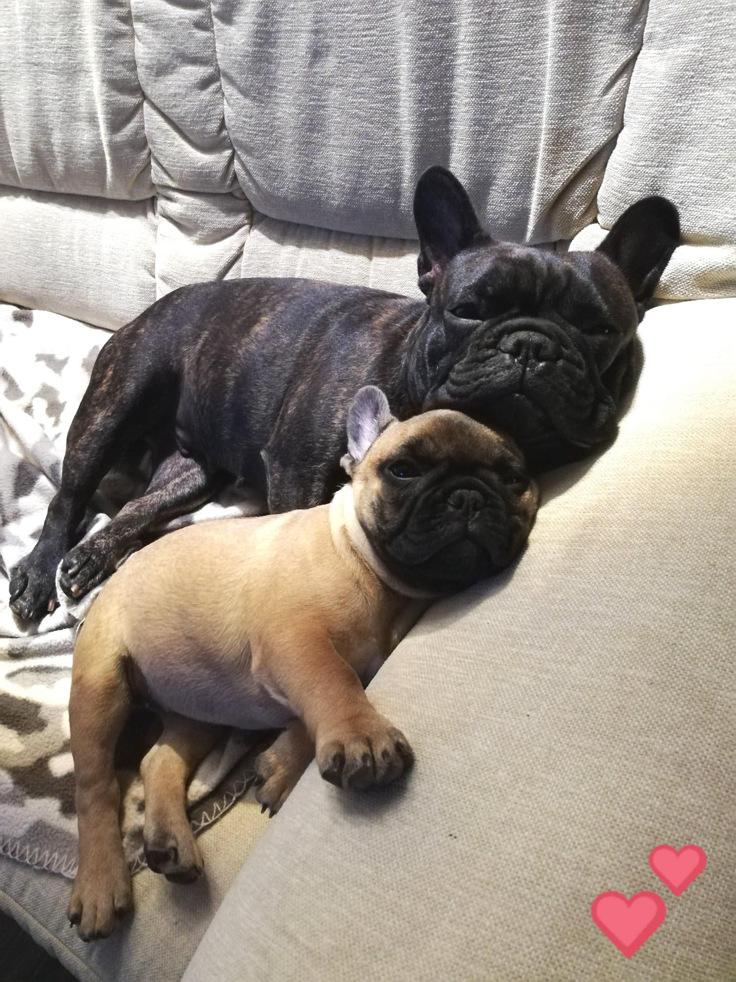 Baileys mit Mama